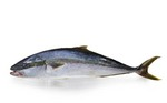 yellowtail_hamachi.jpg